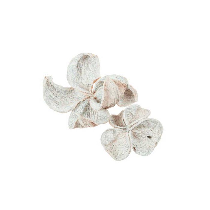 flores-de-loto